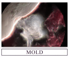 Herbal Mold Formulas